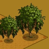 FarmVille: Coin Tree and Giant Coin Tree now available in the store