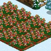 FarmVille Winter Wonderland Crops: Everything you need to know
