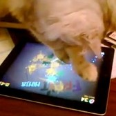 Today in totally adorable cat videos: A feline Fruit Ninja frenzy [Video]