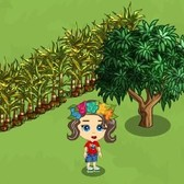 FarmVille Hawaiian Paradise: Limited edition items are available on all farms