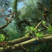 Disney Animal Kingdom Explorers Rainforest Canopy: Our guide to finding every item
