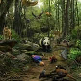 Disney Animal Kingdom Explorers Panda Forest: Everything you need to know