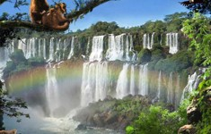disney animal kingdom explorers cheats iguazu falls