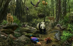disney animal kingdom explorers cheats panda forest
