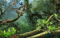 disney animal kingdom explorers cheats rainforest canopy