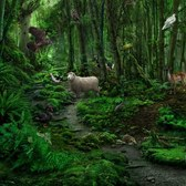 Disney Animal Kingdom Explorers New Zealand: Our guid