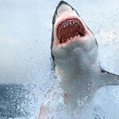 Om nom nom: Three great iOS games to honor the 25th Shark Week