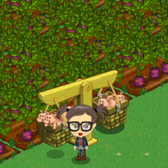 FarmVille Prize Pigs Arrive: Problems & solutions for Prize Pig farming