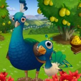 FarmVille 2 Lonely Baby Peacock: Everything you need to know