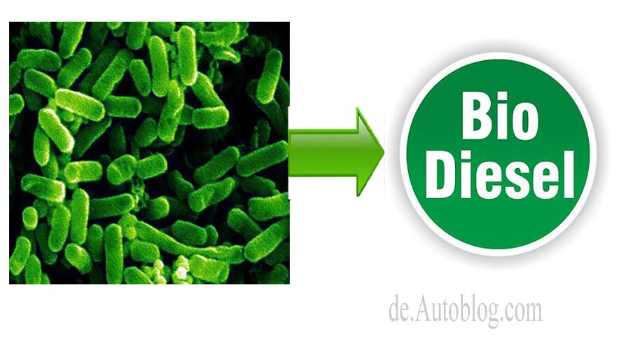 ecoli, E-Coli. Diesel, Fuel, synthetic, snthetisch, Bio Diiesel, Bio Kraftstoff, Bakterien, Shell, Exeter, knstlicher Diesel, 