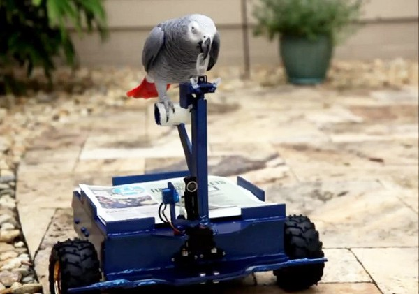Video: Papagei steuert Elektro-Vehikel BirdBuggy mit dem Schnabel