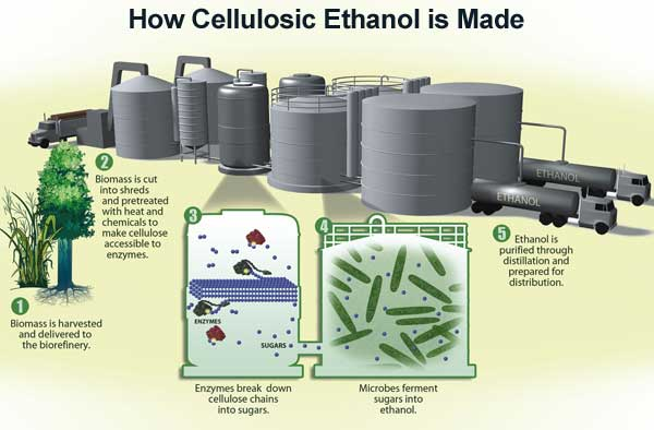 external image celluloseethanolproduction.jpg