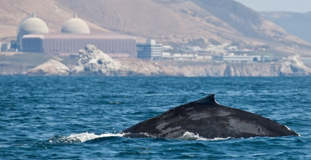 Whale in front of nuclear power plant