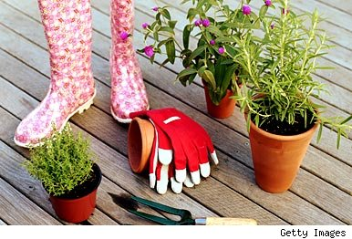 Gardening gloves, plants, boots