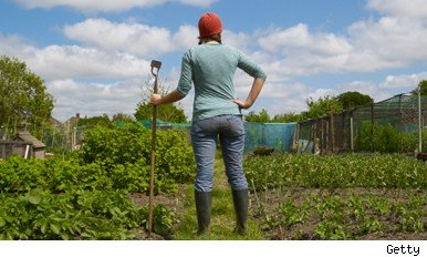 allotments for beginners
