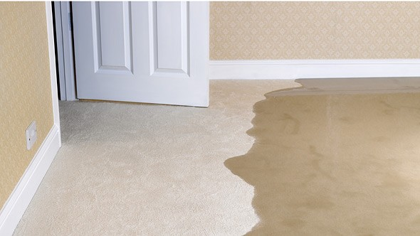Flooded carpet