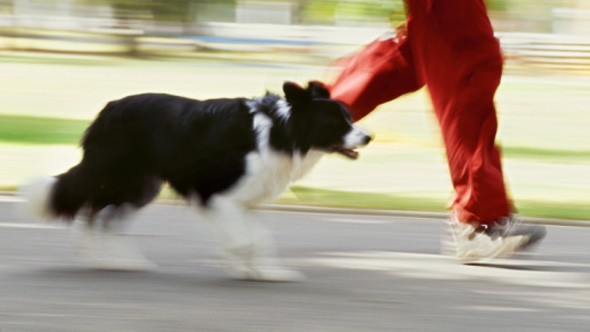 £60 gadget to track dog fitness