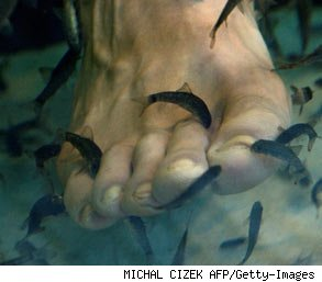 Another industry gets nibbled away foot eating fish for Fish eating dead skin pedicure