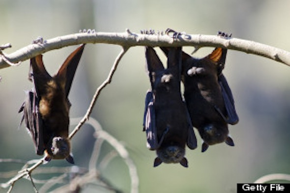 Why Bats Are Summer's Best Friend