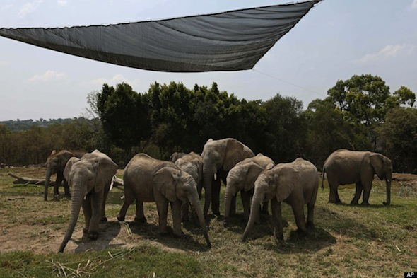 African Elephants Move to Mexico