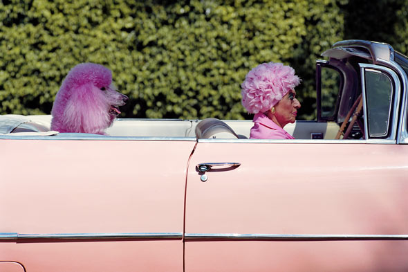 pink convertible car older woman pink hair pink poodle