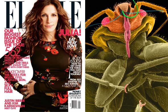 elle magazine september cover julia roberts bedbugs office