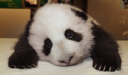 Sad WoW panda is worried about SWTOR (but he shouldn't be)
