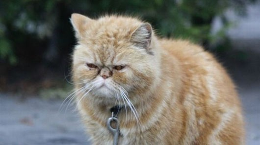 Unhappy cat