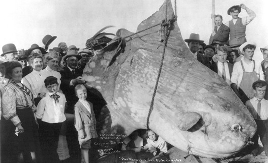 Assume the fish is a question, not just an enormous sunfish.  Public domain photos are odd.