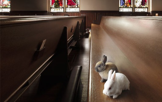 Bunnies at church