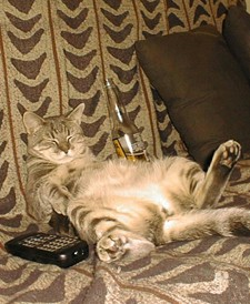 Cat with a beer and remote