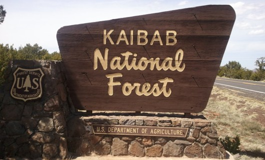 Fallen Earth - Sector Three, er, I mean Kaibab National Forest
