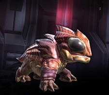 Star Wars: The Old Republic - Gannifari pet