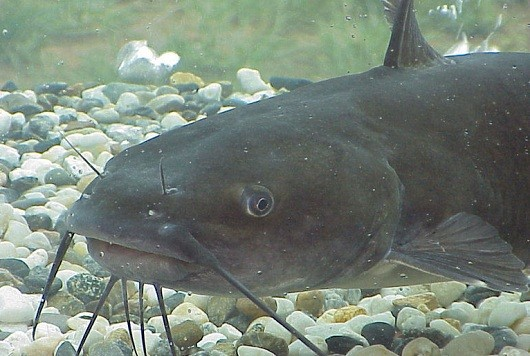 MMO Family  Why Catfish is a term your kids should know