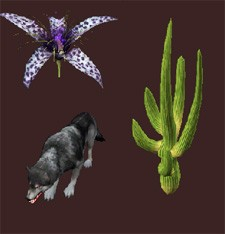 New items for Moonlight Enchantments