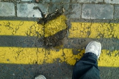 yellow lines on a squashed hedgehog
