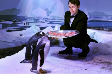 silver service for penguins