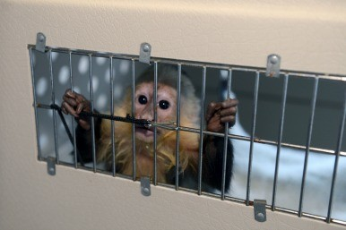 Justin Bieber's bill for abandoned monkey