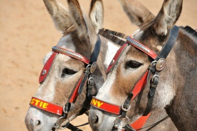 Skegness donkeys