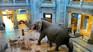 Top 10 Museums in the US for Families