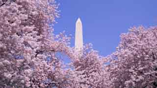 Running the Cherry Blossom 10 Miler? Here Are Our Tips
