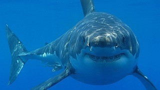 Tourist Attacked By Shark In Cancun