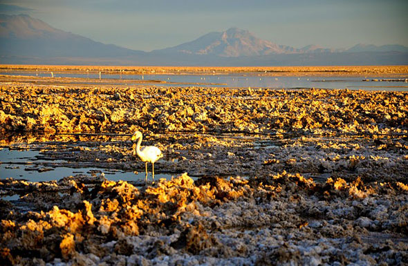 Visit the Salar de Atacama