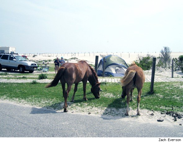 AOL Travel American Horse Trail Road Trip: Assateague Island