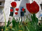 Buying a House: Take Your Time This Spring