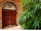 Budding Trend: Foreclosed Homes Converted to Pot Gardens