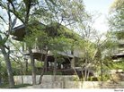 House of the Day: Rising to the Treetops in Texas
