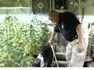 Are Your Neighbors Running a Hidden Marijuana Operation?
