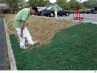 Drought-Stricken Lawns Get a Makeover With Green Paint