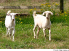 Weird Real Estate Facts You (Probably) Never Knew: Google's Goats and More